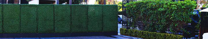 Green Hedge Privacy Fence Rental